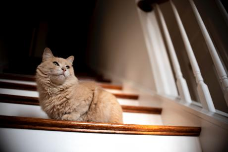 Cat sitting in sunbeam on stairs in a home